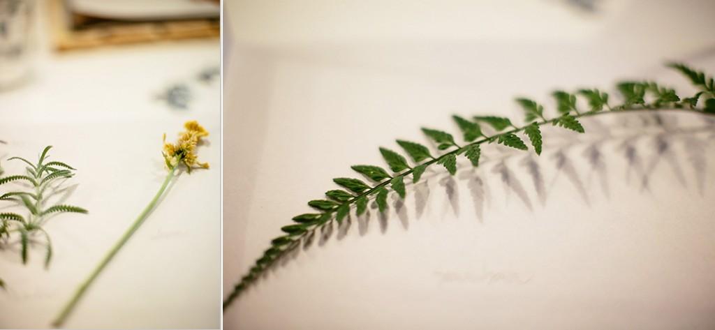 herbarium_12